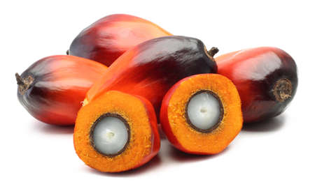 A group of oil palm fruits on the white background