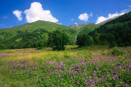 Mountain summer landscape with forest and high peaks. Caucasus. A view of the main Caucasian ridge. Biosphere Reserve resort Dombay. The concept of travel and tourism.