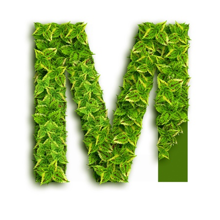 Letter M, alphabet of green leaves isolated on white background.