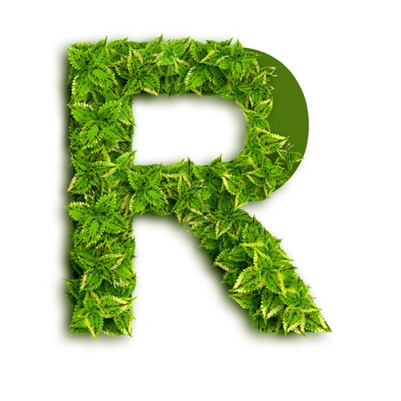 Letter R, alphabet of green leaves isolated on white background.