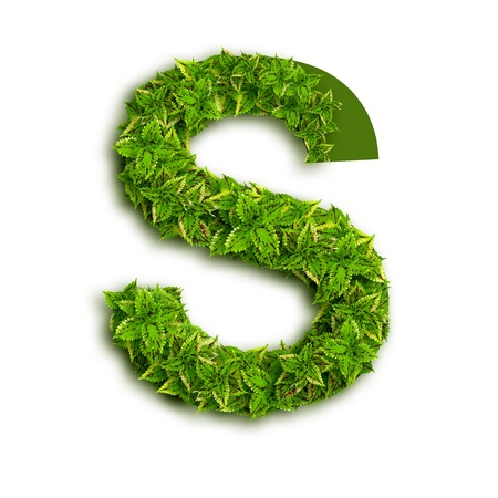 Letter S, alphabet of green leaves isolated on white background.