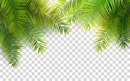 Illustration for Summer palm leaves on transparent background - Royalty Free Image