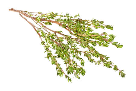 Thyme herb isolated on a white background