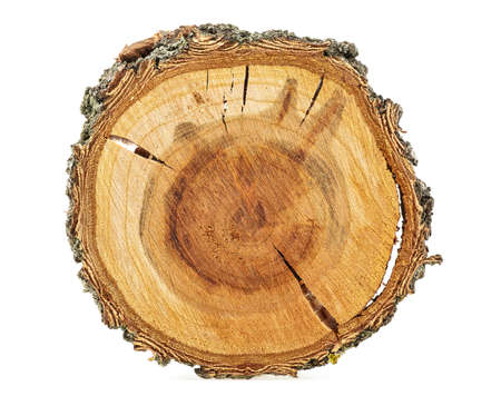 Foto de Apricot tree - Cross section of tree trunk isolated on white background. - Imagen libre de derechos
