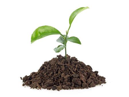 Photo pour Small growing green plant with dark brown soil, white background. - image libre de droit