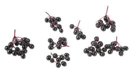 Photo pour Fresh branches of elderberry isolated on a white background, top view. Sambucus (Elder or Elderberry). - image libre de droit