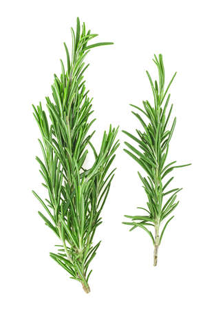 Photo for Fresh green rosemary isolated on a white background, top view. Aromatic herb. - Royalty Free Image
