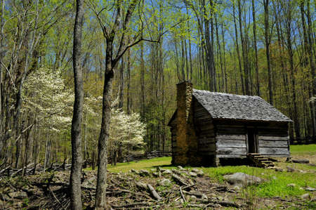 Log Cabin with blooming dogwood trees