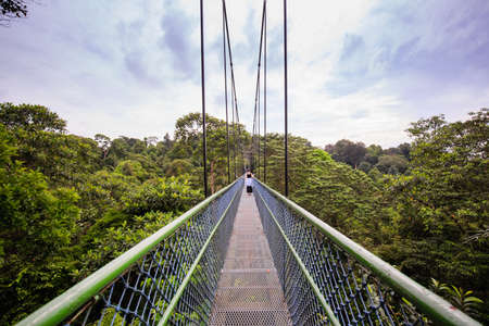 Photo for people Walking over the trees through a tree top walk in Singapore - Royalty Free Image