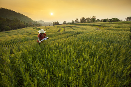 Photo pour Research  Development the Barley Field at Samoeng Chiang Mai Thailand - image libre de droit