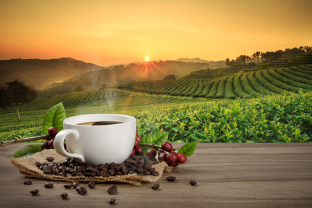 Photo pour Hot coffee cup with fresh organic red coffee beans and coffee roasts on the wooden table and the plantation background with copy space for your text. - image libre de droit