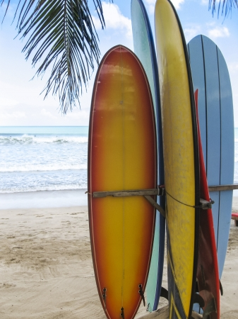 surfboards standing on the beach under a palm tree on kuta beach bali indonesia