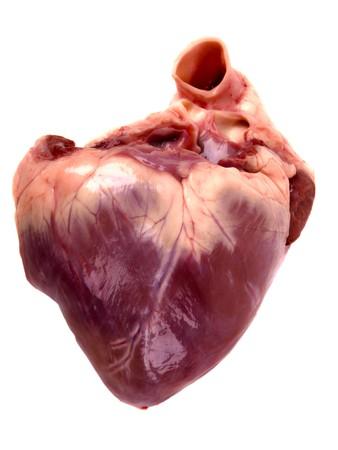 Photo pour pig heart. Close up on white background - image libre de droit