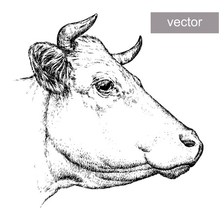 engrave isolated cow vector illustration sketch  linear art
