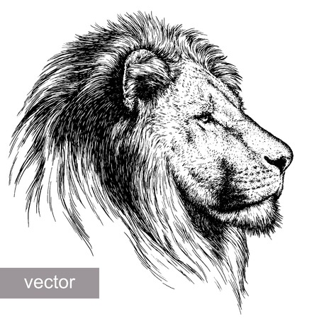 engrave isolated lion vector illustration sketch. linear art