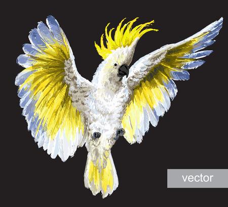 Ilustración de Tropical birds, parrots. Crested Cockatoo, isolated on black - Imagen libre de derechos