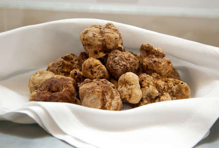 Photo pour Group of Italian white truffles - image libre de droit