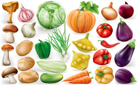 Set of vegetable on white background. Vector illustrationsのイラスト素材