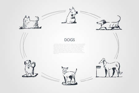 Dogs - different dog breeds walking, eating from bowl, playing with bone, sitting on grass vector concept set. Hand drawn sketch isolated illustration