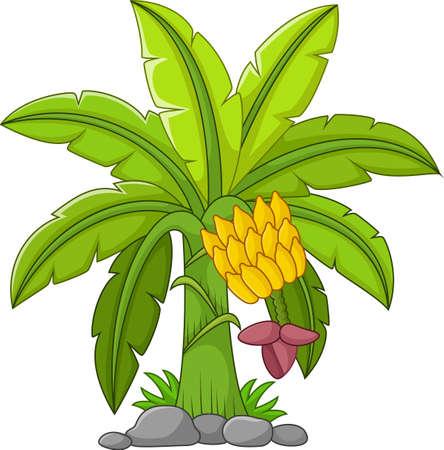 Illustration pour Banana tree on a white background - image libre de droit