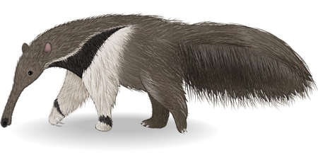 Illustration pour illustration of Cute anteater isolated on white background - image libre de droit