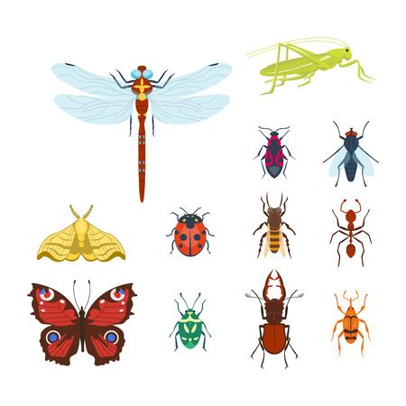 Ilustración de Colorful insects icons isolated wildlife wing detail summer bugs wild vector illustration - Imagen libre de derechos