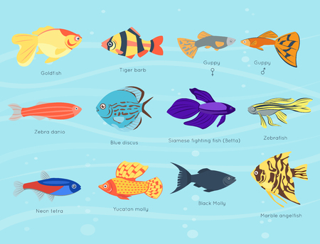 Exotic tropical fish different colors underwater ocean species aquatic nature flat isolated vector illustration