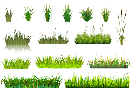 Illustration pour Grass vector grassland or grassplot and green grassy field illustration gardening set floral plants in garden isolated on white background. - image libre de droit
