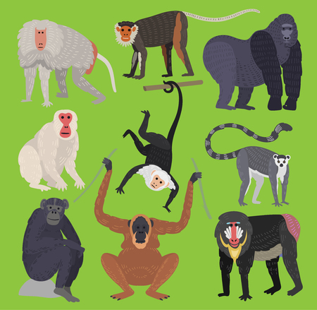 Different types of monkeys ape breed rare animal vector set ...