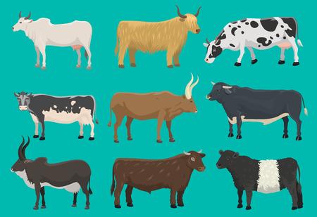 Ilustración de Vector of bulls and cows farm animal - Imagen libre de derechos