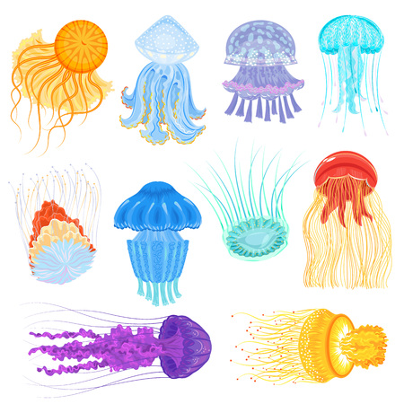 Illustration pour Jellyfish vector ocean jelly-fish and underwater nettle-fish illustration set of jellylike glowing medusa in sea isolated on white background - image libre de droit