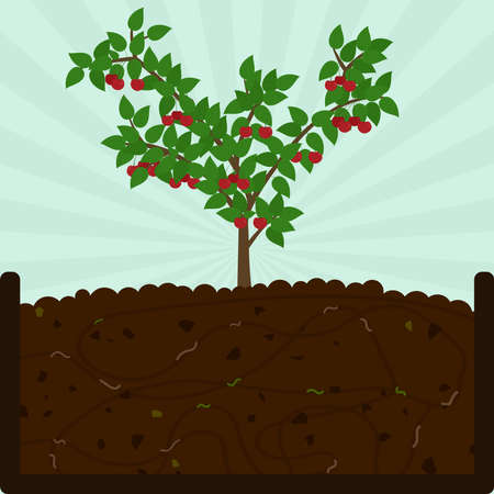 Illustration for Planting cherry fruit. Composting process with organic matter, microorganisms and earthworms. Fallen leaves on the ground. - Royalty Free Image