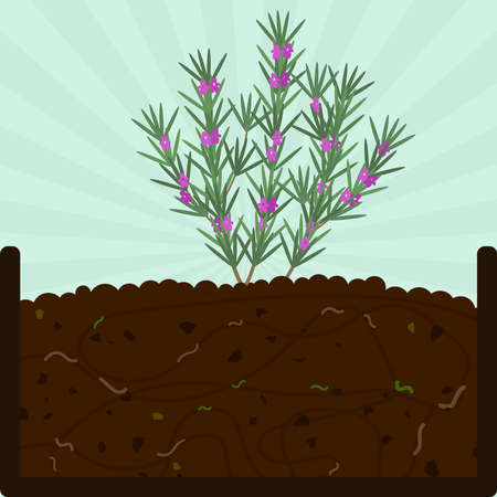Illustration for Planting rosemary tree with flowers. Composting process with organic matter, microorganisms and earthworms. Fallen leaves on the ground. - Royalty Free Image