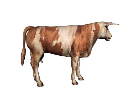 Photo pour Cow as a meat supplier runs around in the pasture - image libre de droit