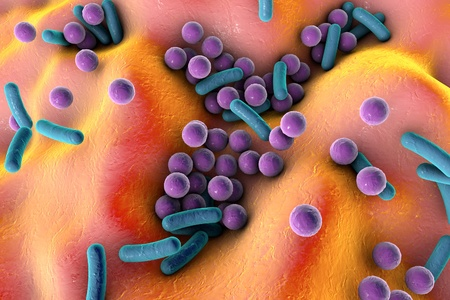 Bacteria on the surface of skin or mucous membrane, model of staphylococcus and streptococcus, model of microbes, bacteria simulating electron microscope, pyogenic bacteria, enteric bacteria