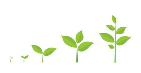 Illustration pour Phases plant growing. - image libre de droit