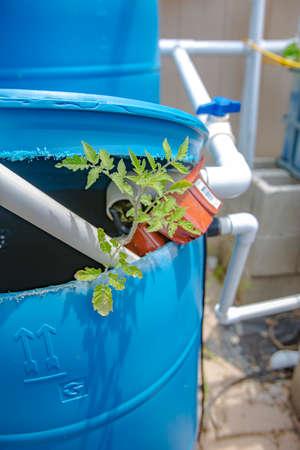 Aquaponics and Hydroponics support heavy vegetation