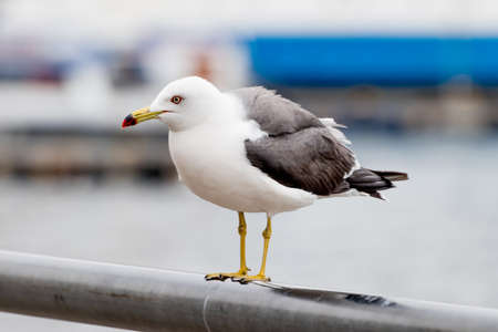 Photo for Seagull on the seashore. - Royalty Free Image