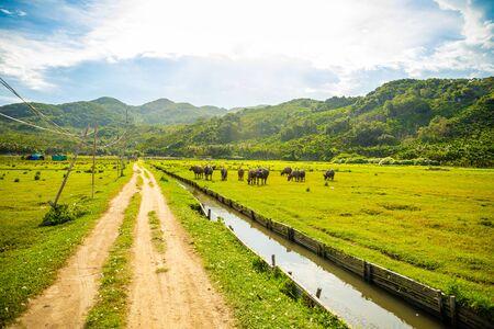 Foto de Herd of buffalo, original ecological stocking animals, Hainan, China - Imagen libre de derechos