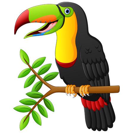 Ilustración de toucan cartoon sitting on the branch - Imagen libre de derechos
