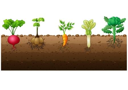 Illustration for Vector illustration of Different kind of vegetables illustration - Royalty Free Image