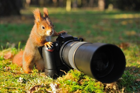 Photo pour Squirrel as a photographer with big professional camera - image libre de droit