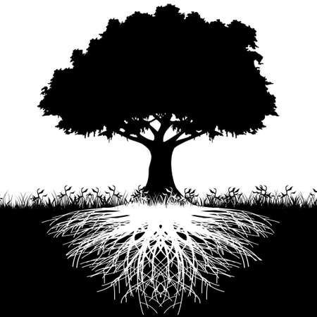 Tree roots silhouette