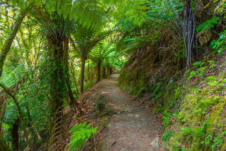 Photo for Forest path at Abel Tasman national park in New Zealand - Royalty Free Image