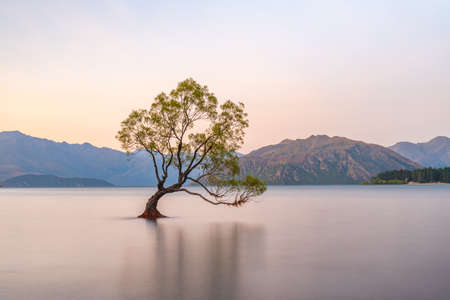 Photo for Sunset view of That Wanaka tree in New Zealand - Royalty Free Image