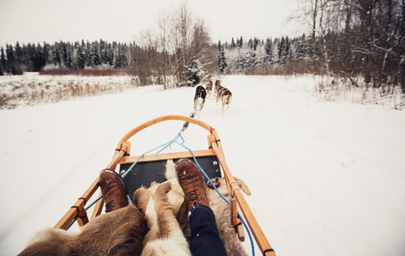 Sled dogs pulling a sled through the winter forest in Central Finland