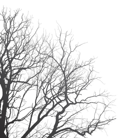 Branches of a tree on a white background, illustration clip-art