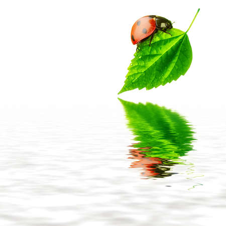 Pure nature concept - ladybug leaf and water