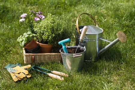 Gardening tools and flower on the grass close up