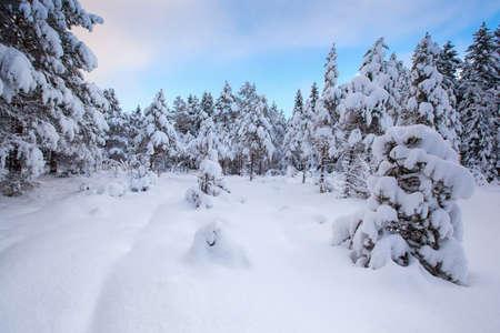 Photo pour beautiful winter landscape snow tree - image libre de droit